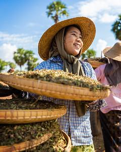Peanut Winnowing (Bagan, Myanmar 2013)