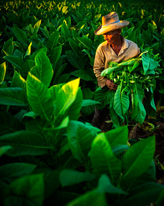 The tabacco farmers of Viñales (Pinar del Rio, Cuba 2019)