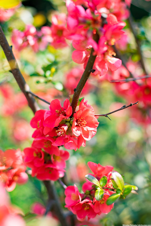 Spring colors in Bratislava