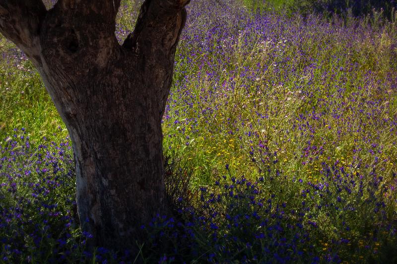 Nature's Canvas (Alicante, Spain 2013)