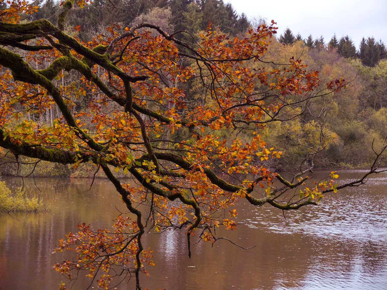 Autumn at Black Down