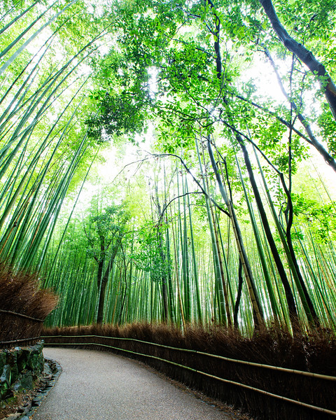 The sacred path through Arashiyama's bamboo forest (Kyoto, Japan 2015)