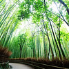 The sacred path through Arashiyama's bamboo forest (Kyoto, Japan 2015)