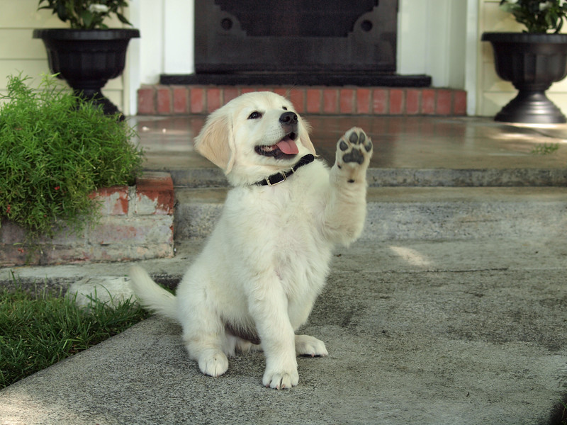 Brinkley says Hi ! And welcome to Paws Cause Pet Photography