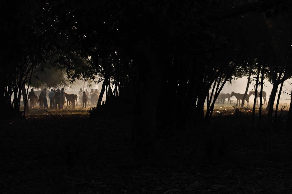 On wanderlust and bathing elephants