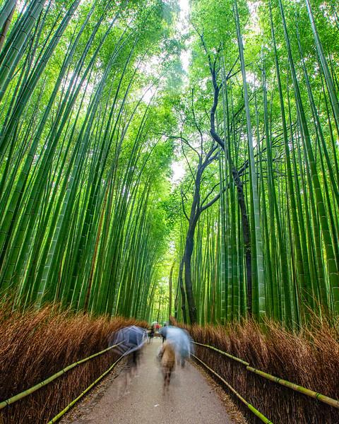 Arashiyama's bamboo grove (Kyoto, Japan 2015)