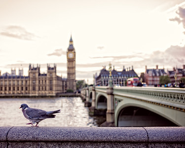 Walk Sprightly Like A Pigeon (London, United Kingdom 2016)