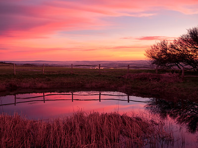 Dawn at Jill's Pond