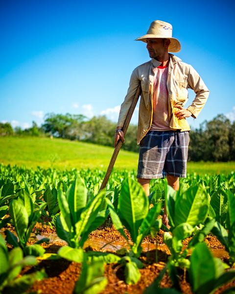 The tabacco farmers of Viñales (Pinar del Rio, Cuba 2019)