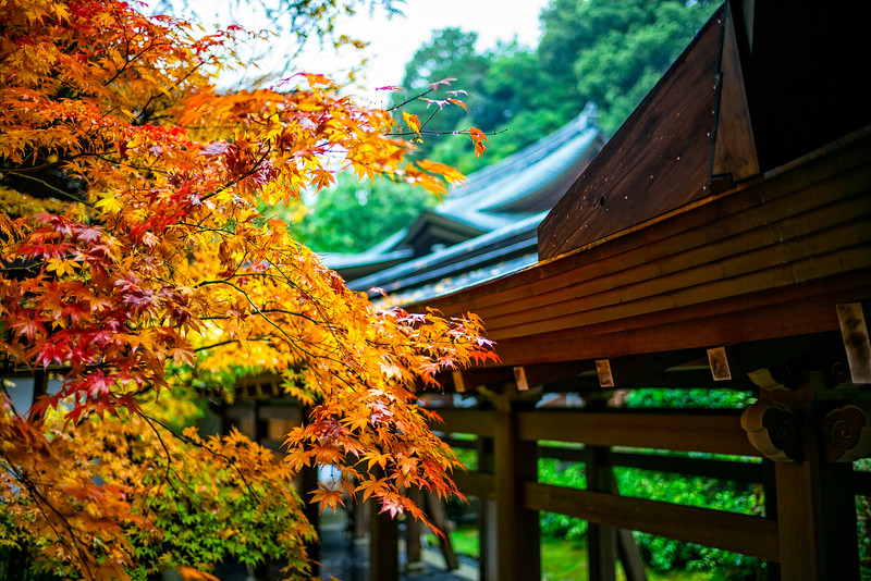 Colors at the Ryōan-ji garden, home to the Seven Imperial Tombs (Kyoto, Japan 2015)