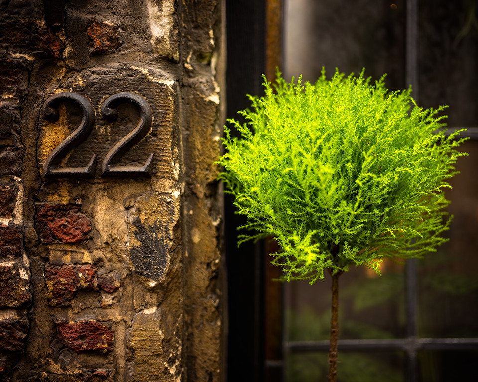 22 Wijngaard Straat (Antwerp, Belgium 2018)