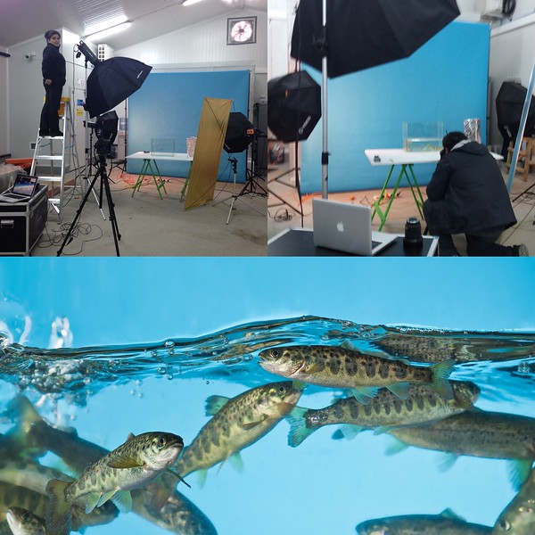 En terreno, fotografiando peces para Sealand