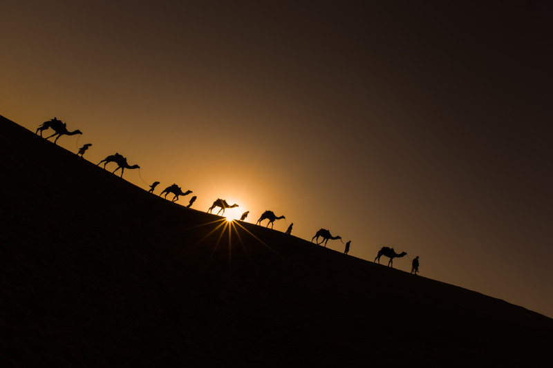 The Caravan (Thar Desert, India 2015)