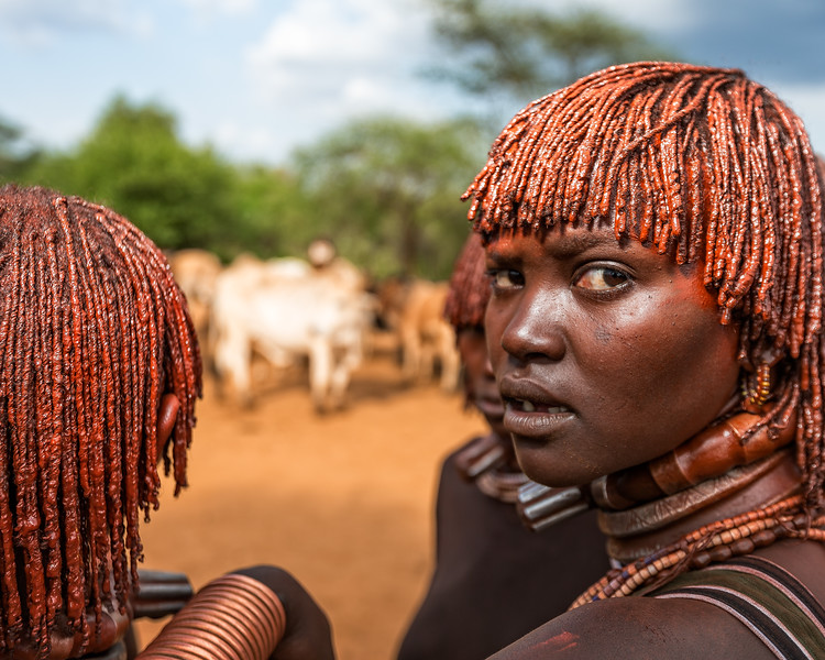 Hamer wifes at a bull jumping ceremony in the Omo Valley (Omo Valley, Ethiopia 2014)