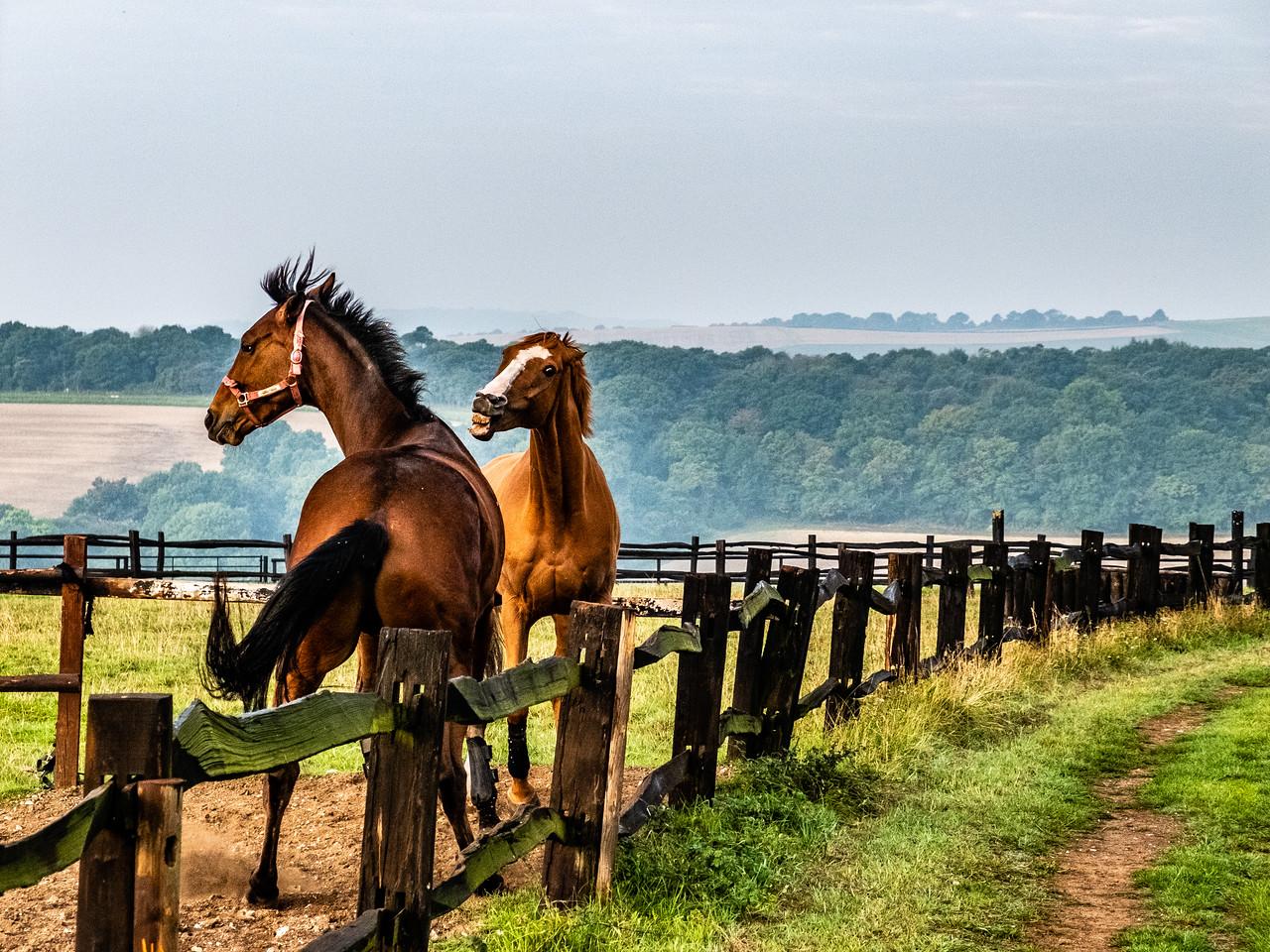 Horse Fight by Larry Van Howe