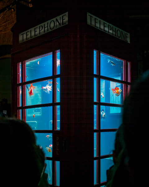 Aquarium at Seven Dials (London, United Kingdom 2018)