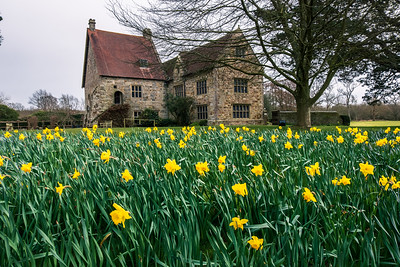 Daffodils at Michelham Priory