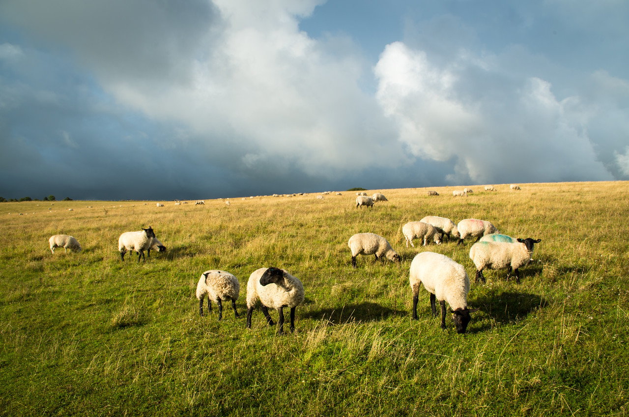Stormy Day on the South Downs