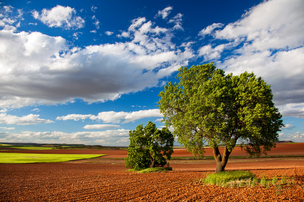 The poetry of earth (Castilla la Mancha, Spain 2013)