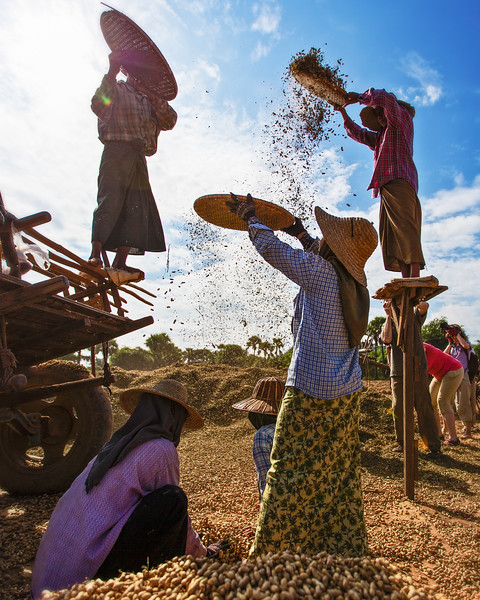 Peanut Winnowing (Bagan, Myanmar 2013)