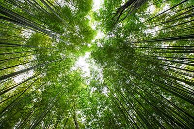 Arashiyama's Sagano bamboo grove (Kyoto, Japan 2015)