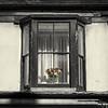 Lewes Window
