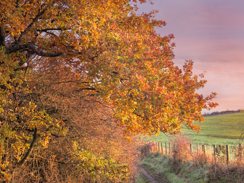 South Downs Autumn