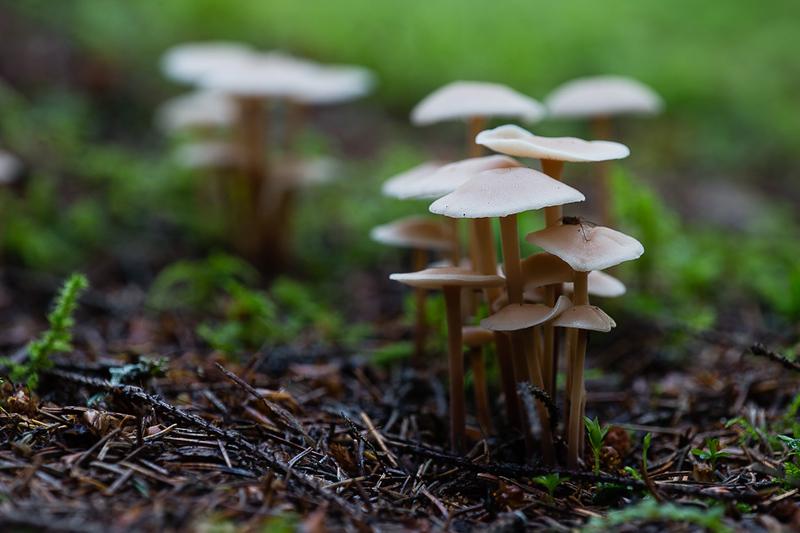 Sēnes / Mushrooms
