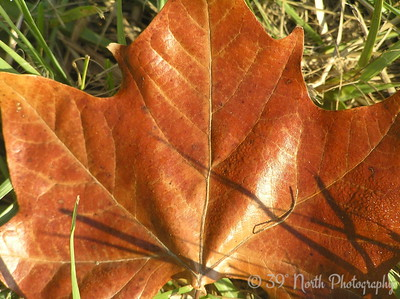 The Leaf - One of Many by Mikki K.