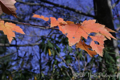 Last Leaves by Barb K.