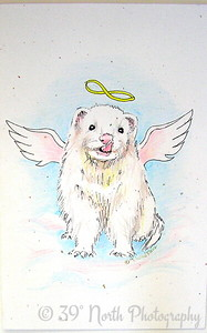My ANGEL Ferret, Jamie by Mikki K.