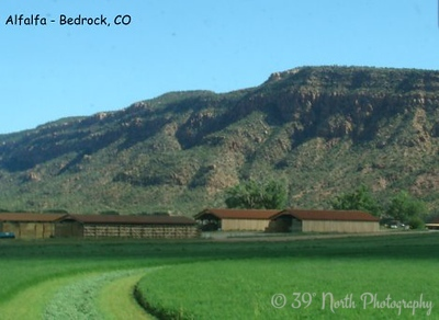 Alfalfa - Bedrock, CO by Sandi P.