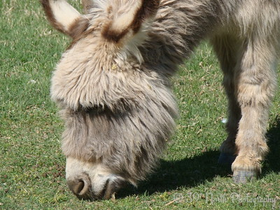 Donkey by Norma H.