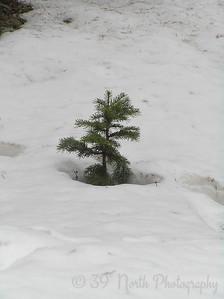 The Littlest Evergreen by Mikki K.