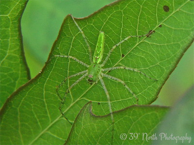 LITTLE GREEN SPIDER'S GREEN WORLD by Mikki K.