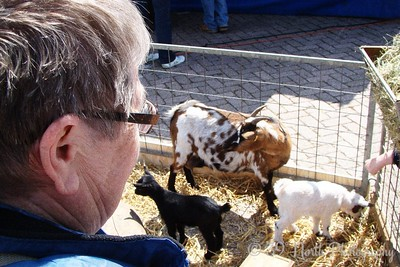 Grandma looking at Goats... by Annet H.
