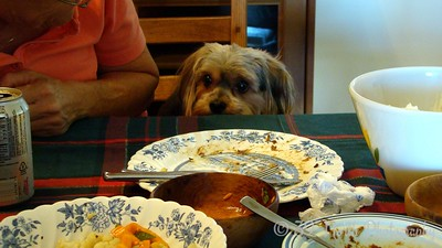 Hungry dog by Norma H.
