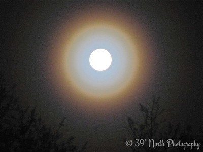 Moon Halo by Mikki K.