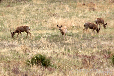 Herd of Deer by Laurie H.
