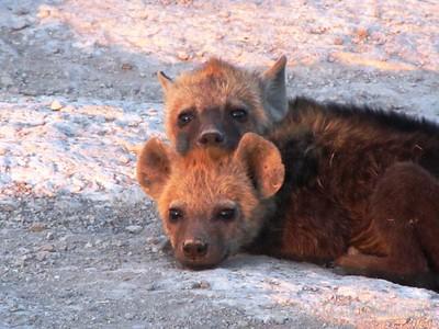 Hyenas by Angie K.