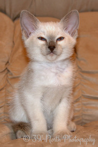 Incredibly and Irresistably Cute Kitten by Laurie H.