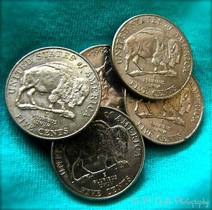 My Buffalo Nickels by Mikki K.