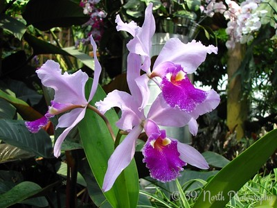 """O"" is for Orchids (1) by Dave T."