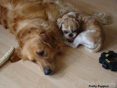 Pretty Puppies by Sandi P.