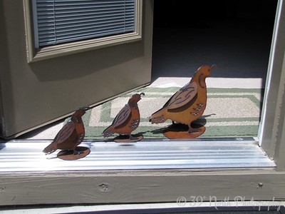 Indoor & Outdoor Quail by Dave