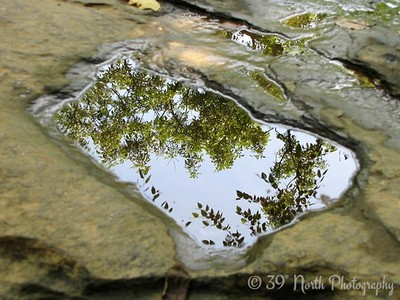 Reflection by Dave