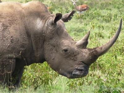 Rhino Close-up by Angie