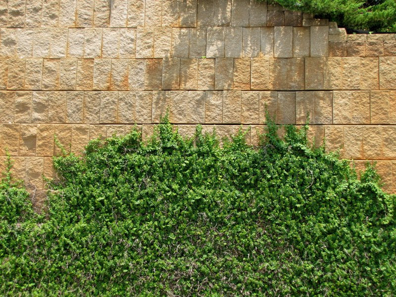 Retaining Wall by Dave