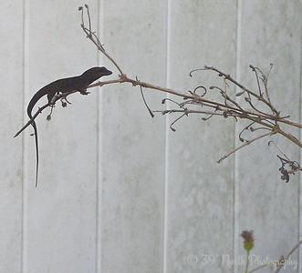 Little Lizard. Pushing it. by Mikki K.
