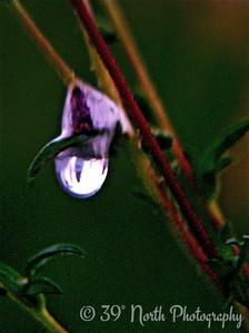 Nature's Little Light by Mikki K.